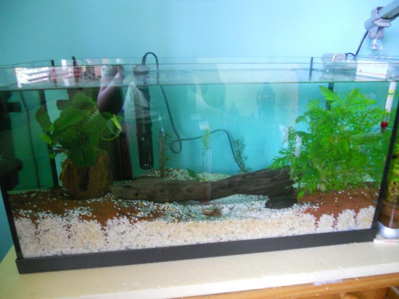 Mes 2 aquarium  Dscn0516