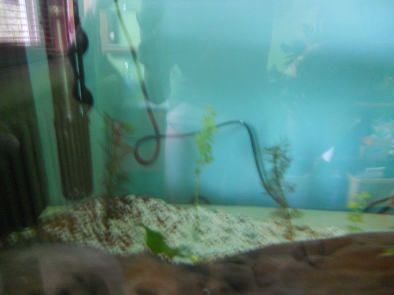 Mes 2 aquarium  Dscn0517