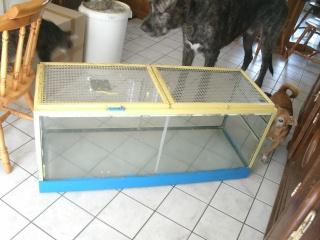 Cage en verre Gedc2816