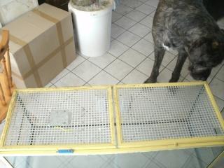 Cage en verre Gedc2817
