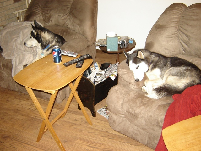 Demon, Dakota & Diablo -- UPDATED 4/16/2014 WITH PHOTOS Dsc01610