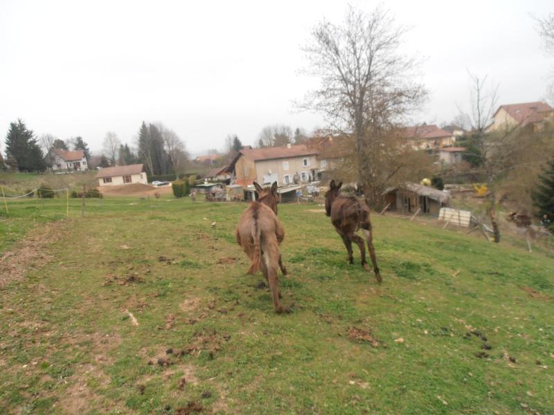 "Concours : ""cheval au galop"" GAGNANTE : TItâne - Page 2 P4010413"
