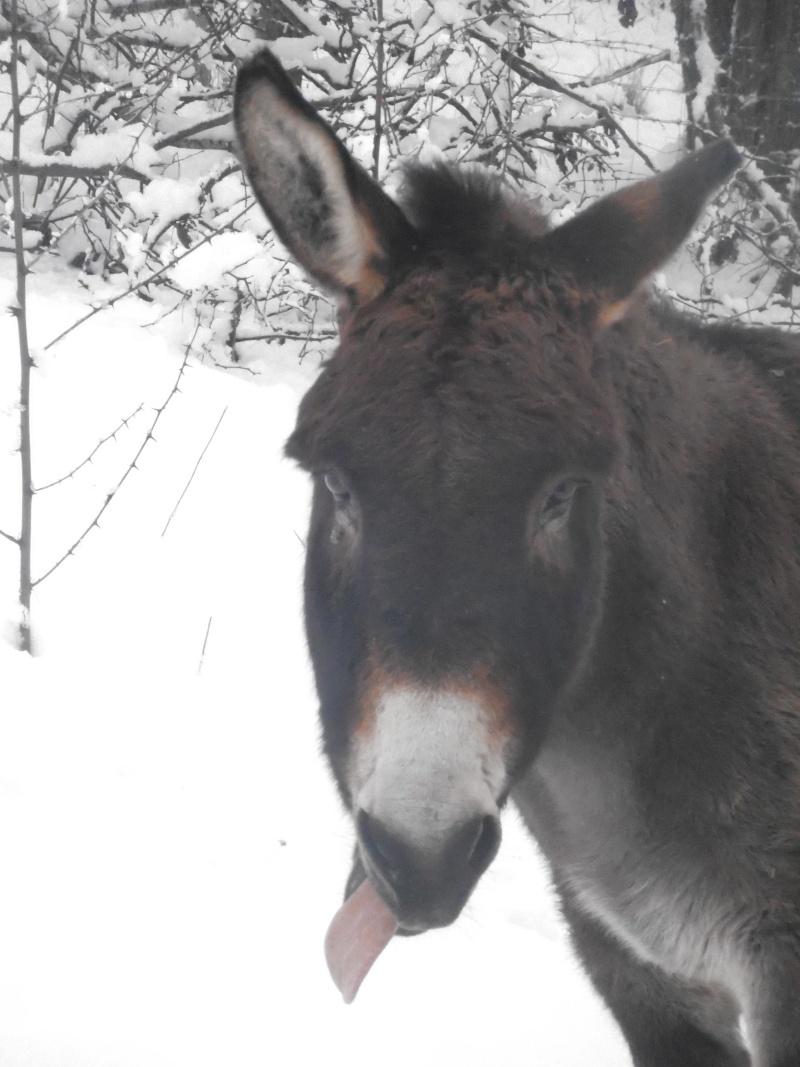 Les chevaux dans la neige Pc080510