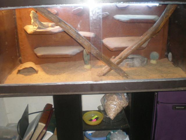 terrariums de mes reptiles P4090010