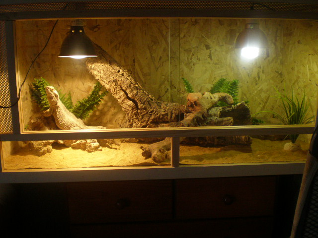terrariums de mes reptiles P4090013
