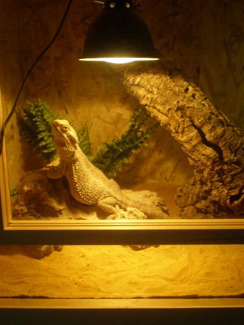 terrariums de mes reptiles P4090014