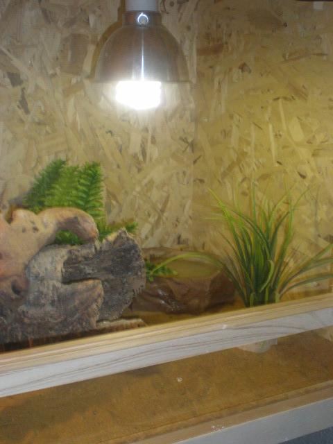 terrariums de mes reptiles P4090015
