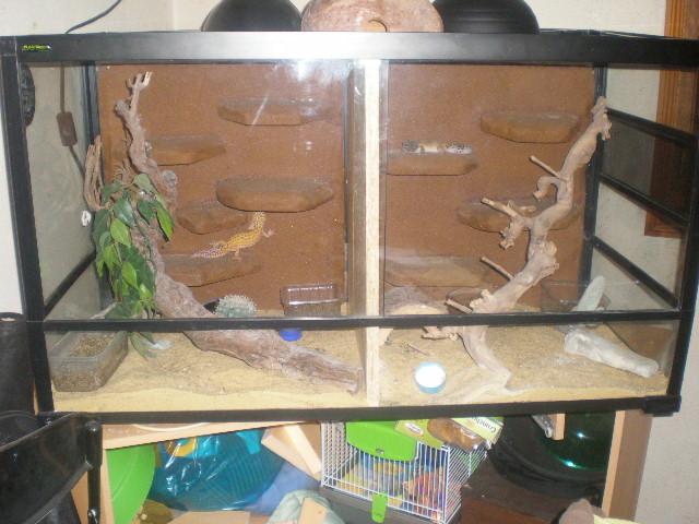 terrariums de mes reptiles P4090017