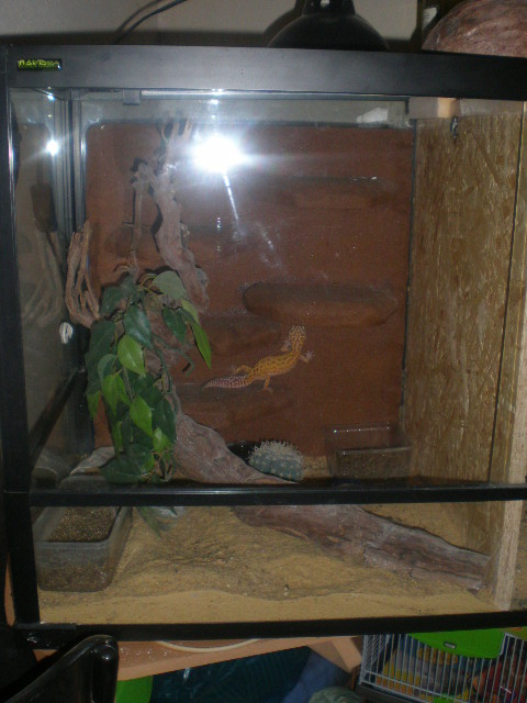 terrariums de mes reptiles P4090018