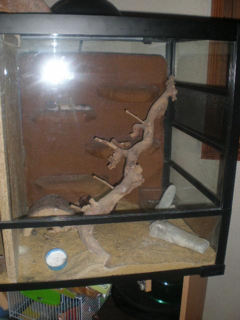 terrariums de mes reptiles P4090019