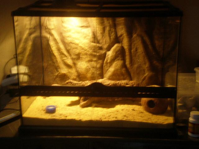 terrariums de mes reptiles P4090020