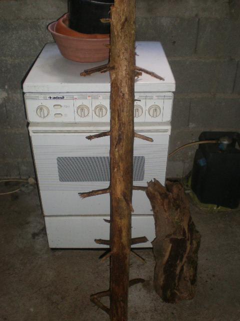 désinfecter banches... P5280013