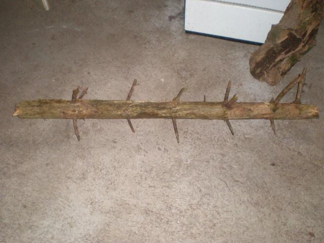 désinfecter banches... P5280014
