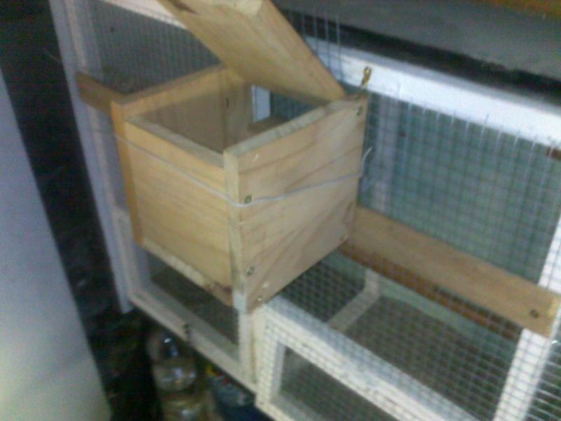 Mes cages et installations pour mes diamants mandarins 09082011