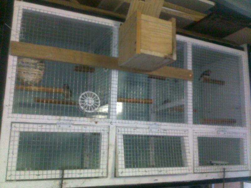 Mes cages et installations pour mes diamants mandarins 09082014