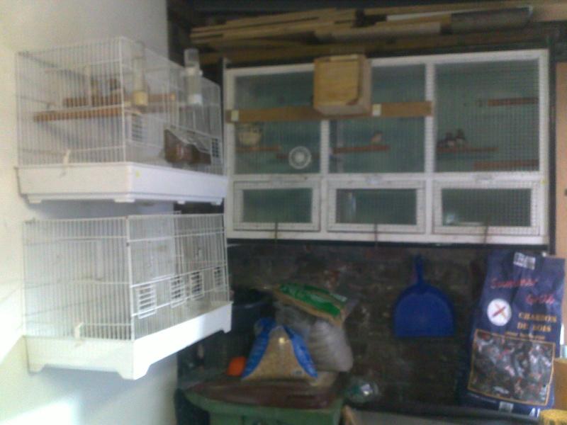 Mes cages et installations pour mes diamants mandarins 15082011