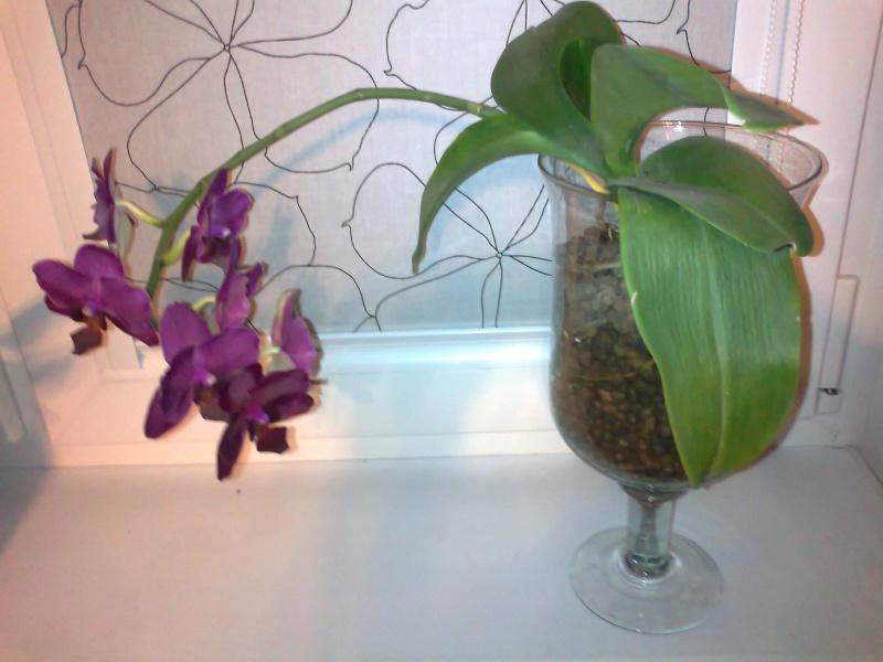 Uprawa wazonowa w keramzycie - Page 2 Zdjaci12