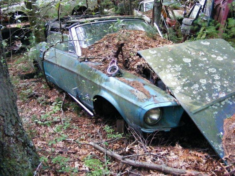 D'autre photos d'épave de Mustang 1967 1968 33_bmp10