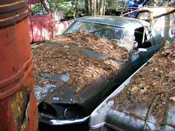 D'autre photos d'épave de Mustang 1967 1968 4_bmp10