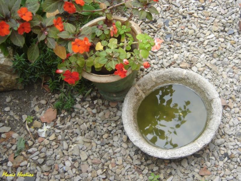 """Concours """"photo"""" du mois de mars 2012. Thème : """"Reflet sur l'eau"""" Image_10"""