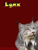 Team A (Predator Island) - Page 8 Lynx10