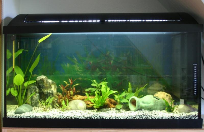 mon premier aquarium 00211