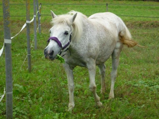 LOLA - ONC Selle typée Camargue née en 1999 - adoptée en juillet 2011 par maya67 P1020317