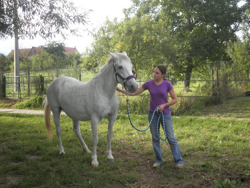 LOLA - ONC Selle typée Camargue née en 1999 - adoptée en juillet 2011 par maya67 P8120110