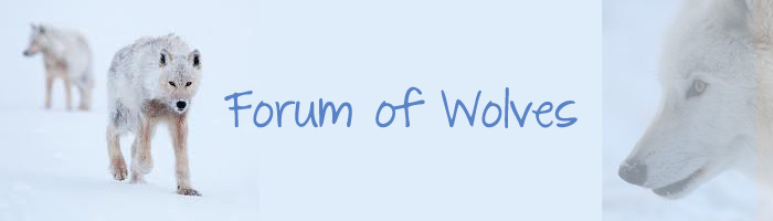 Forum of Wolves