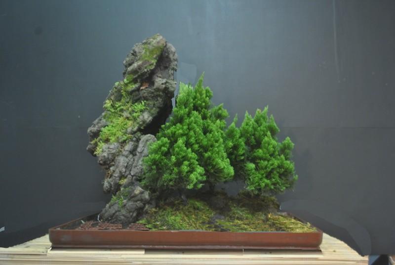 Alpine forest in the tropics Dsc_0010
