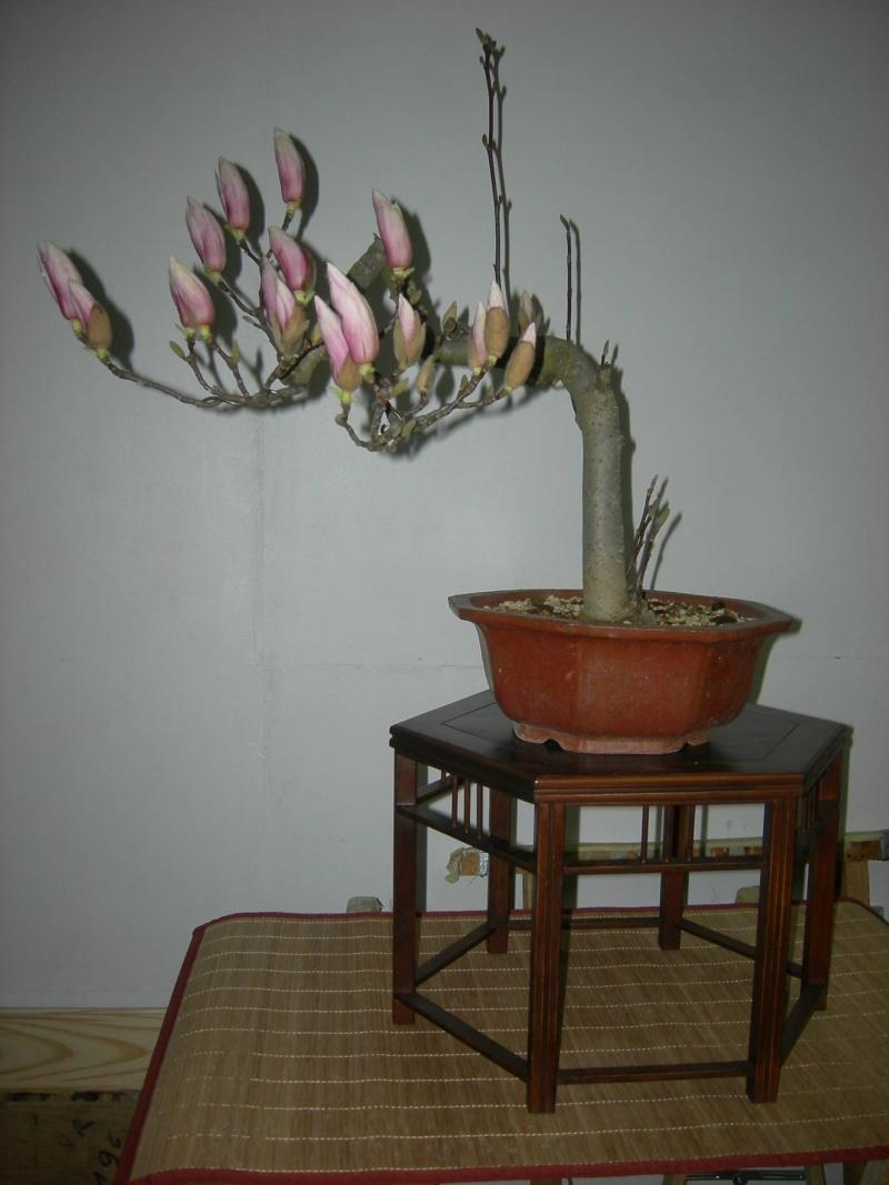 magnolia...cutting vs layering Dscn0720