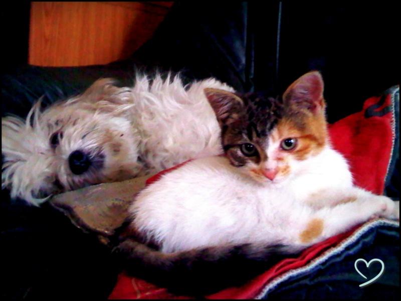 Vos animaux de compagnie [2] Lolape10