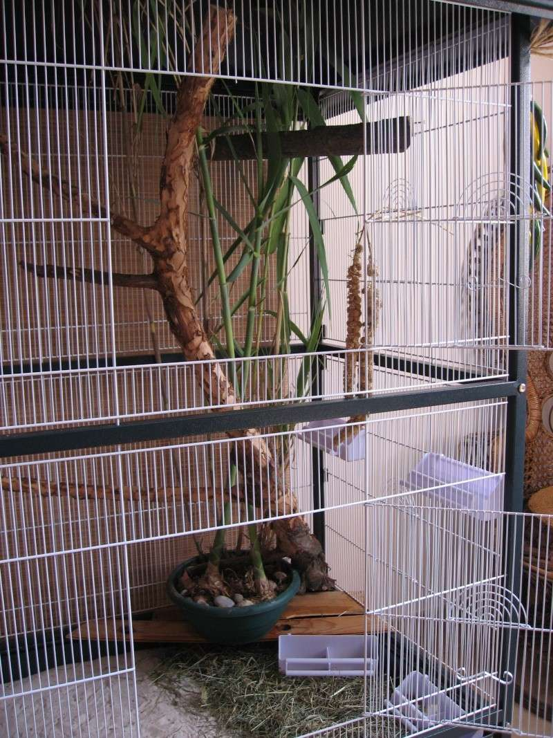 Kalï & Nũma's Home 2011_012