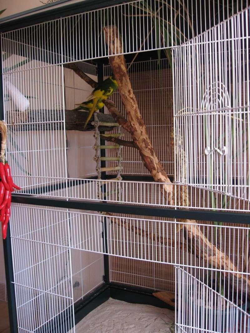 Kalï & Nũma's Home 2011_013