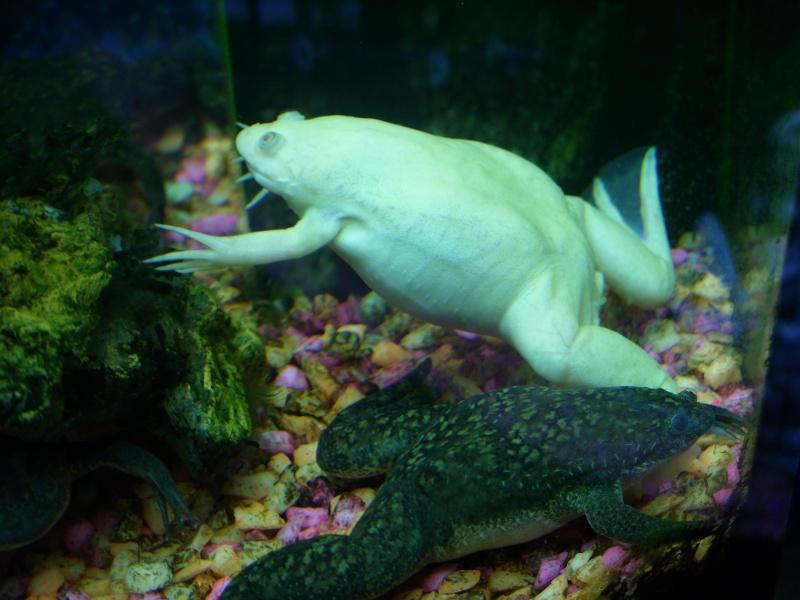 Aquarium 160 litres Ss856110