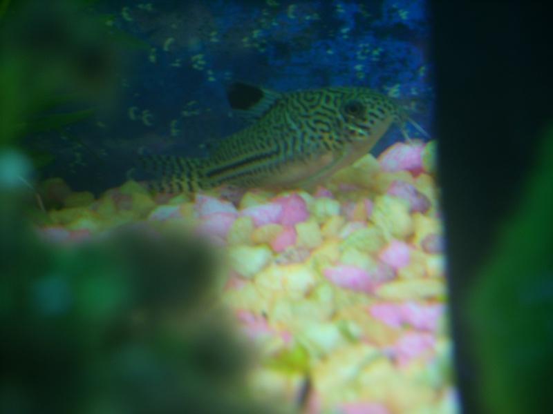 Aquarium 160 litres Ss857217