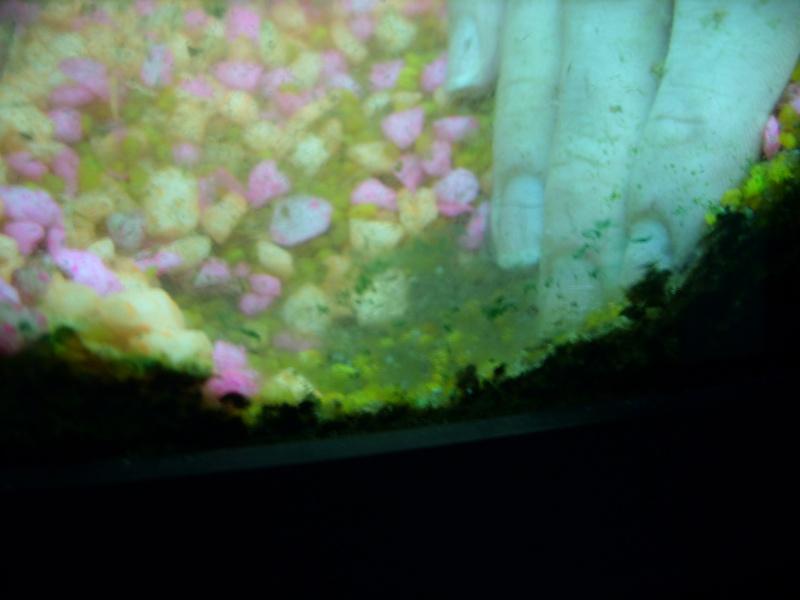 Aquarium 160 litres Ss857219