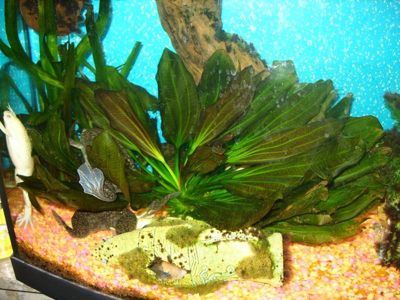 Aquarium 160 litres Ss857221