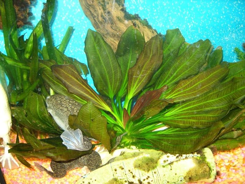 Aquarium 160 litres Ss857222