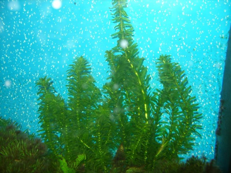 Aquarium 160 litres Ss857223