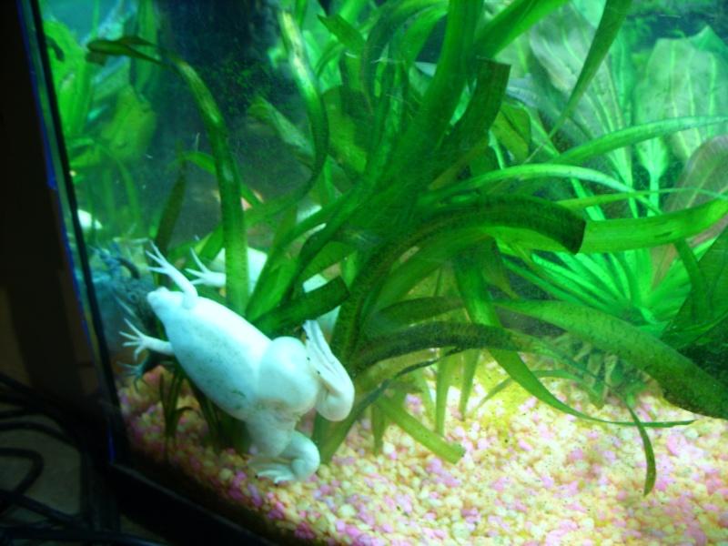 Aquarium 160 litres Ss857225