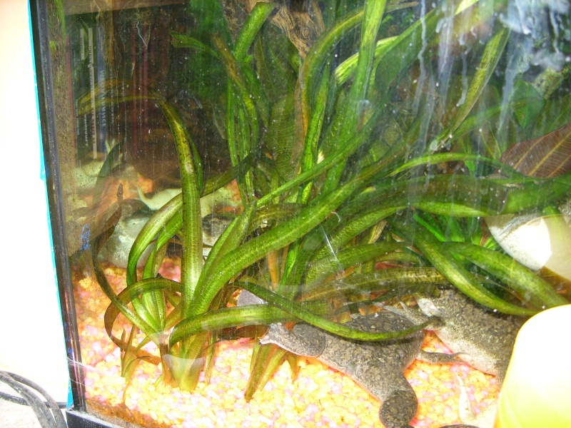 Aquarium 160 litres Ss857226