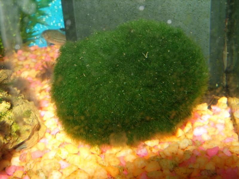 Aquarium 160 litres Ss857311
