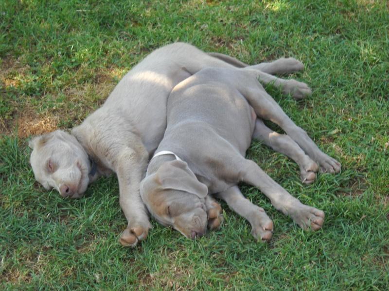 Nos amis les animaux Dscn0912