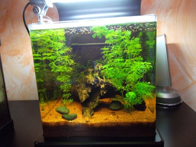 Conseil pour ajout de plantes Sam_0124