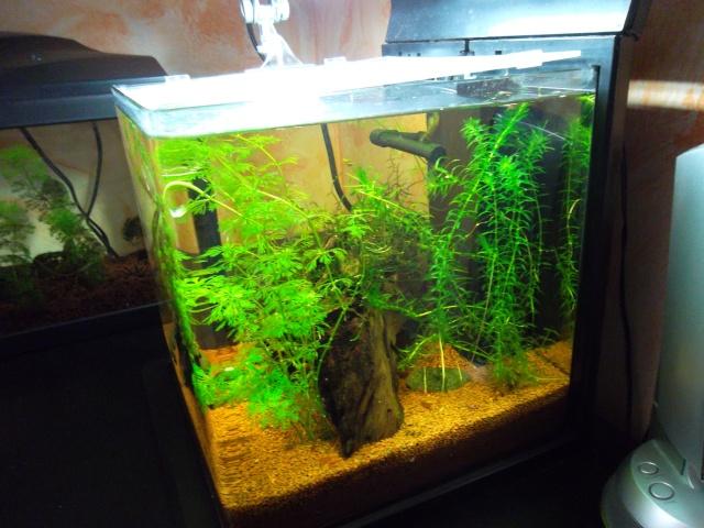 Conseil pour ajout de plantes Sam_0125