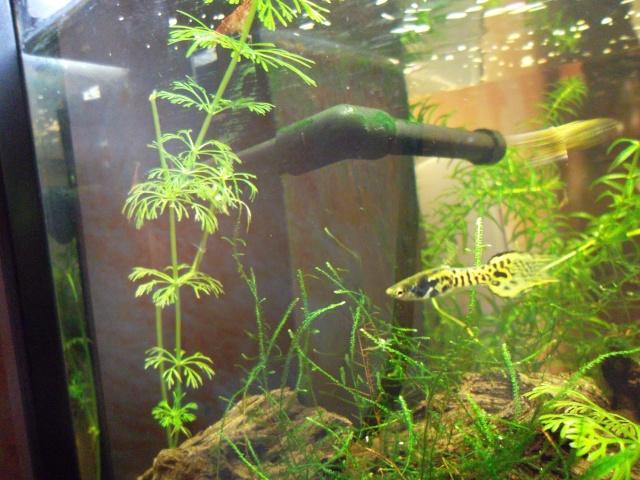 Conseil pour ajout de plantes Sam_0126