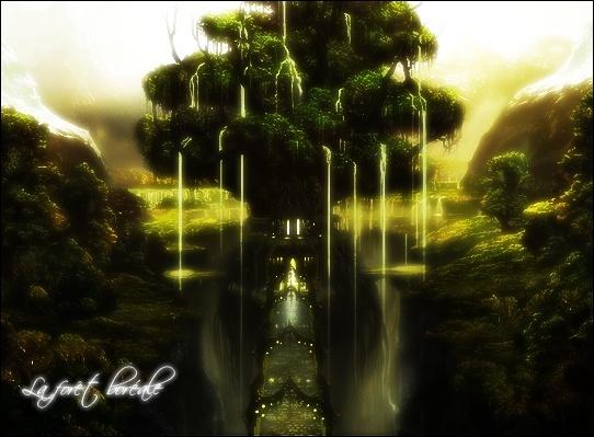 [Image et description] La forêt boréale Borea10