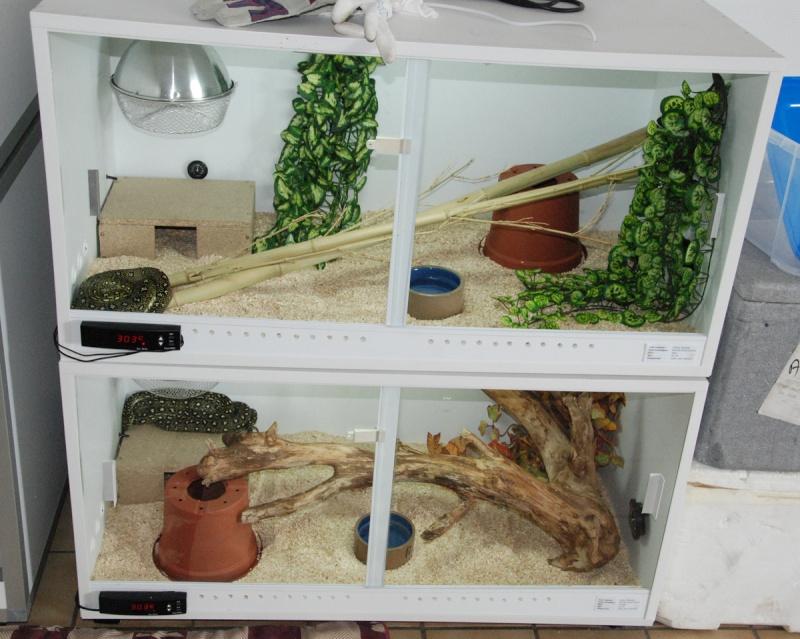 Install Morelias / Womas Diaman19