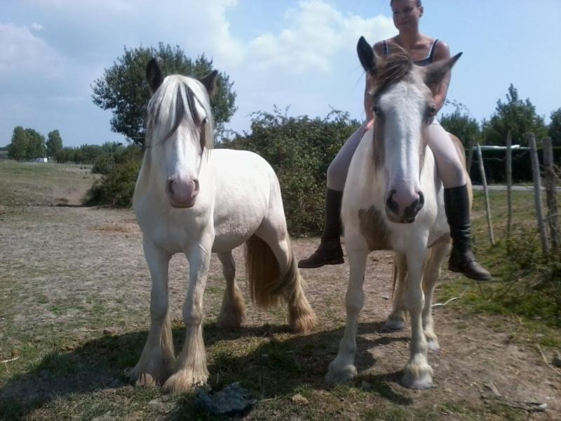 chevaux, rencontre,vacances... Photo011